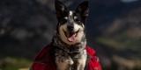 The Best Dog Hiking Backpacks