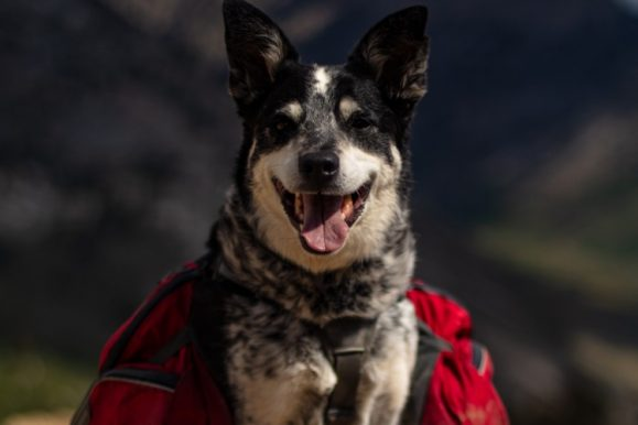 The Best Dog Hiking Backpacks